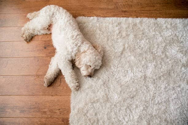 pet odor removal from area rug