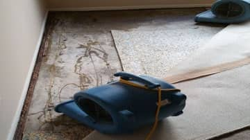 water-damage-carpet-la-crescenta
